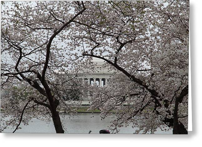 Attraction Greeting Cards - Cherry Blossoms with Jefferson Memorial - Washington DC - 011352 Greeting Card by DC Photographer