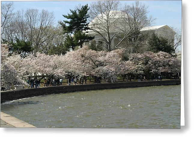 Memorials Greeting Cards - Cherry Blossoms with Jefferson Memorial - Washington DC - 01139 Greeting Card by DC Photographer