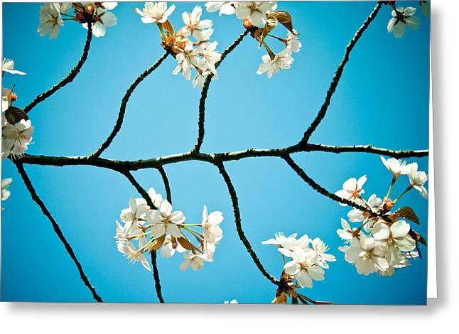 Close Focus Nature Scene Greeting Cards - Cherry Blossoms with sky Greeting Card by Raimond Klavins