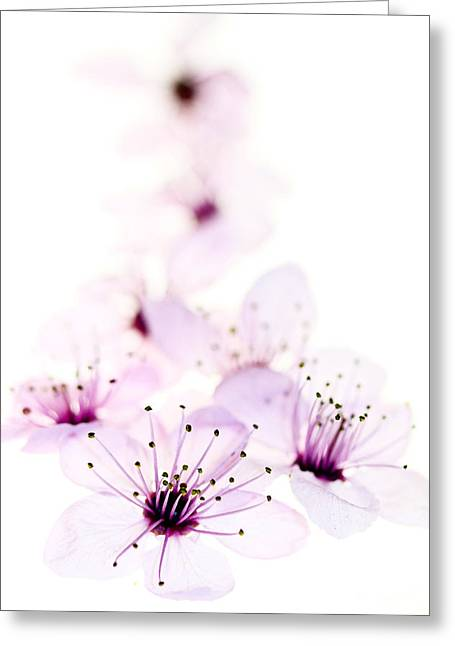Cherry Blossoms Photographs Greeting Cards - Cherry Cascade Greeting Card by Rebecca Cozart