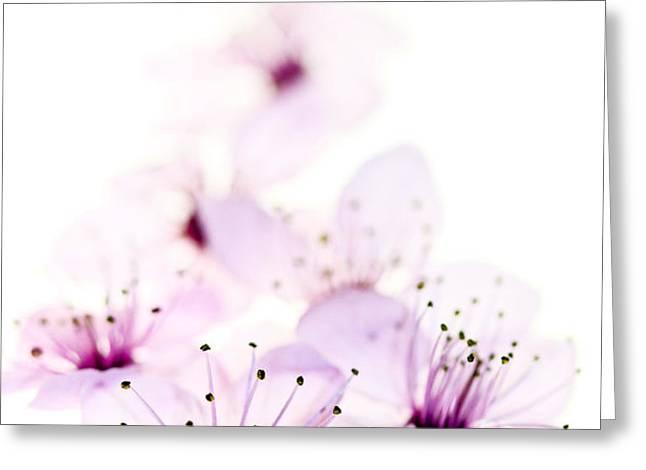 Cherry Cascade Greeting Card by Rebecca Cozart
