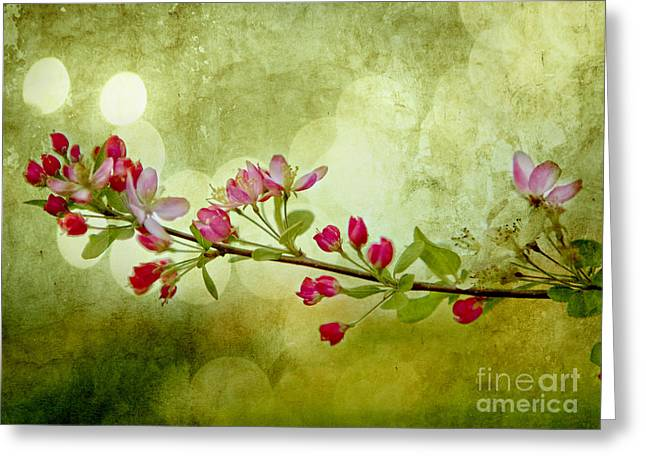 Fruit Tree Photographs Greeting Cards - Cherry Delight Greeting Card by Linde Townsend