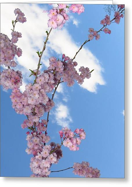Land Love And Sky Greeting Cards - Cherry Floral Fountain Greeting Card by Sonali Gangane