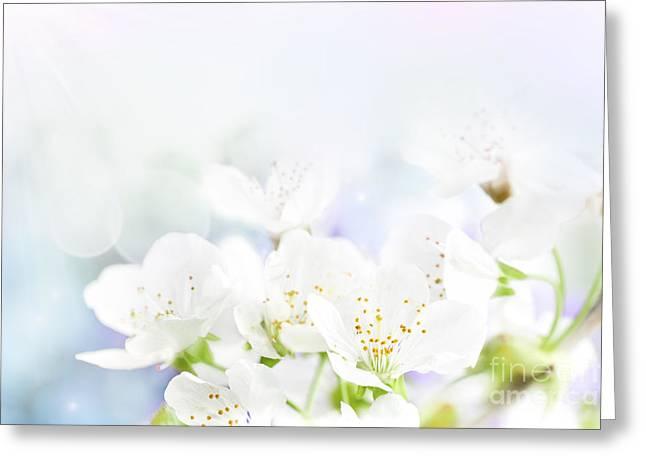 Mythja Greeting Cards - Cherry flowers Greeting Card by Mythja  Photography