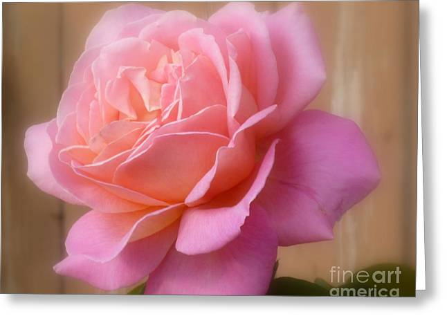 Photograph Of Peaches Greeting Cards - Cherry Peach Pink  Greeting Card by Lingfai Leung