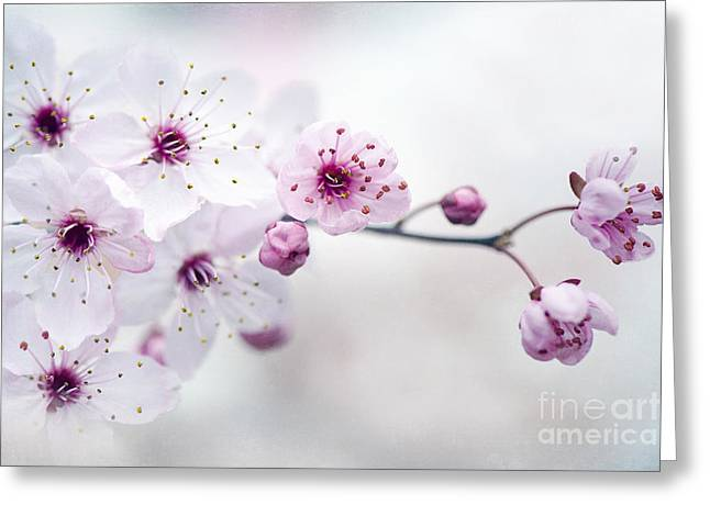 Pink Flower Branch Greeting Cards - Cherry Plum Blossom Greeting Card by Jacky Parker