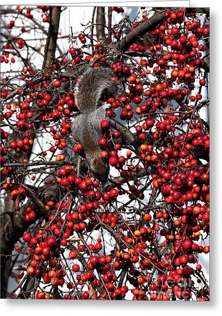 Fruit Tree Art Greeting Cards - Cherry Thief Greeting Card by John Rizzuto