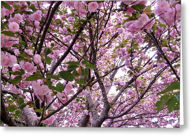 Cherry Blossoms Paintings Greeting Cards - Cherry Tree 2 Greeting Card by Mimi Saint DAgneaux