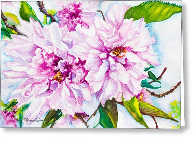 Cherry Blossoms Paintings Greeting Cards - Cherry Tree Blossoms Greeting Card by Patricia Allingham Carlson