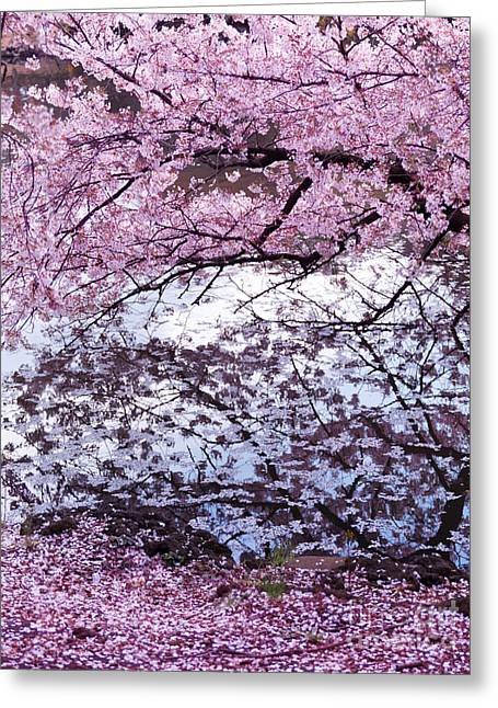Garden Scene Greeting Cards - Cherry tree branches with pink blossom touching water Greeting Card by Oleksiy Maksymenko