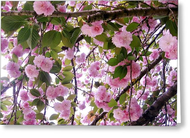 Cherry Tree Close-up Greeting Card by Mimi Saint DAgneaux