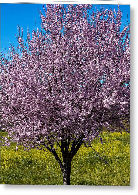 Pink Flower Branch Greeting Cards - Cherry tree in bloom Greeting Card by Garry Gay
