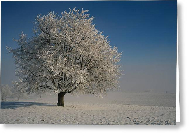 Snow Scene Landscape Greeting Cards - Cherry Tree On A Snow Covered Greeting Card by Panoramic Images