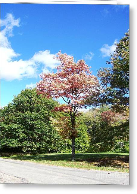 Esem8chart.com Greeting Cards - Cherry Tree Greeting Card by Sarah Holenstein