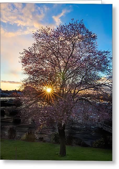 Ocean Art Photgraphy Greeting Cards - Cherry Tree Sunset Greeting Card by Heather K Jones