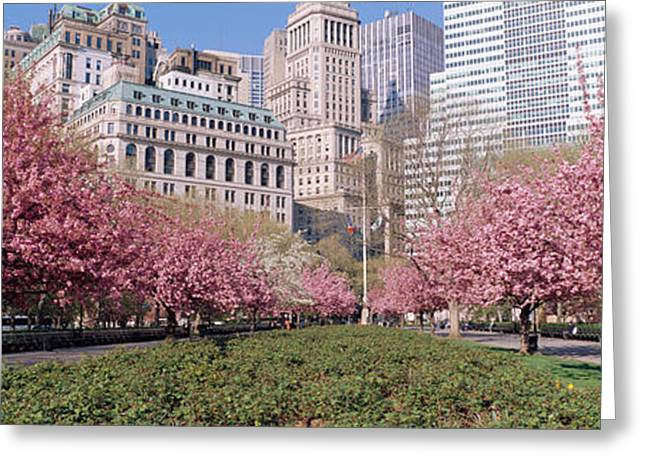 Cherry Trees, Battery Park, Nyc, New Greeting Card by Panoramic Images
