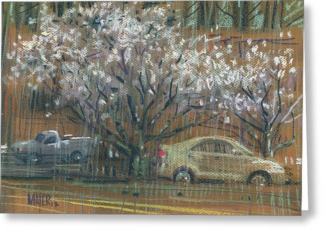 Cherry Drawings Greeting Cards - Cherry Trees Greeting Card by Donald Maier