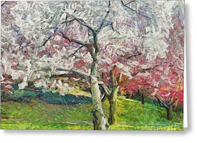 Van Gogh Style Greeting Cards - Cherry trees Greeting Card by Dragica  Micki Fortuna