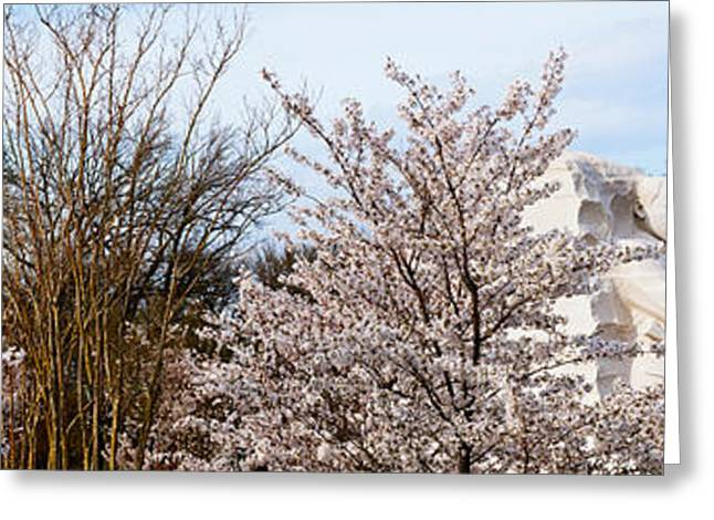 Martin Luther King Jr. Greeting Cards - Cherry Trees In Front Of A Memorial Greeting Card by Panoramic Images