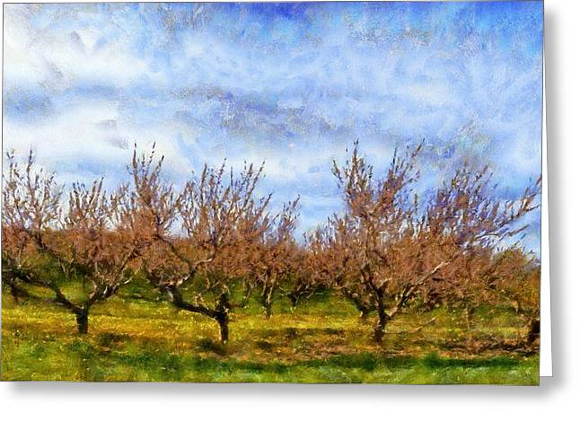 Fruiting Greeting Cards - Cherry Trees with Blue Sky Greeting Card by Michelle Calkins