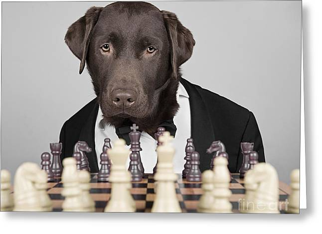 Black Tie Photographs Greeting Cards - Chess Dog Greeting Card by Justin Paget
