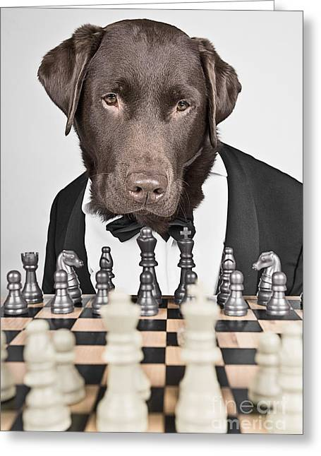 Black Tie Photographs Greeting Cards - Chess Master Dog Greeting Card by Justin Paget
