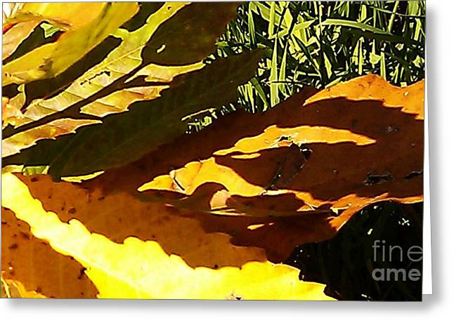 Most Favorite Photographs Greeting Cards - Chestnut Abstract Greeting Card by Martin Howard