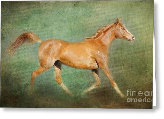 Michelle Wrighton Greeting Cards - Chestnut Arabian Horse Trotting Greeting Card by Michelle Wrighton