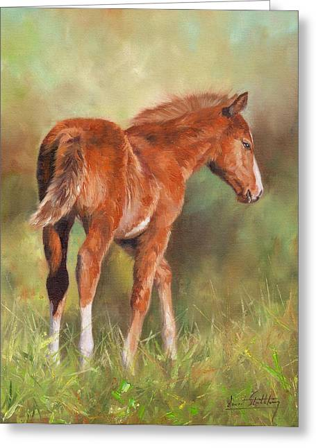Baby Mammals Greeting Cards - Chestnut Foal Greeting Card by David Stribbling