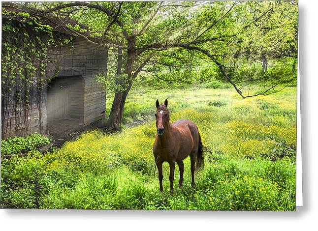 Tennessee Barn Greeting Cards - Chestnut Horse in a Sunny Meadow Greeting Card by Debra and Dave Vanderlaan