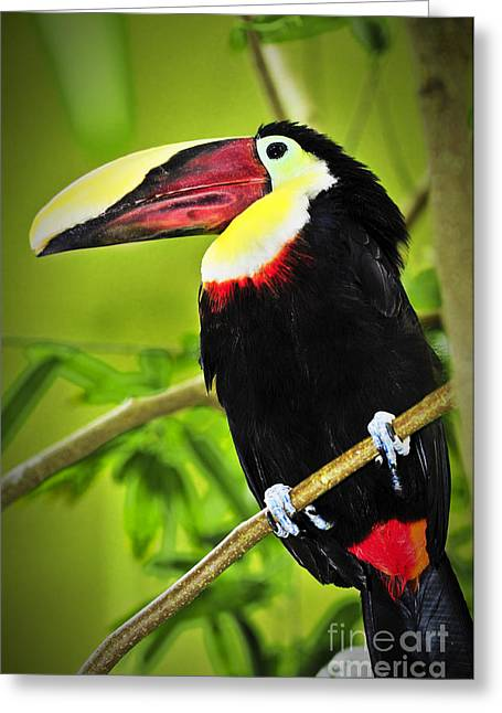Red Claws Greeting Cards - Chestnut Mandibled Toucan Greeting Card by Elena Elisseeva