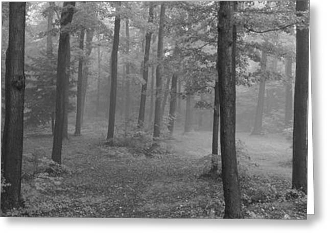 Forest Floor Greeting Cards - Chestnut Ridge Park, Orchard Park, New Greeting Card by Panoramic Images