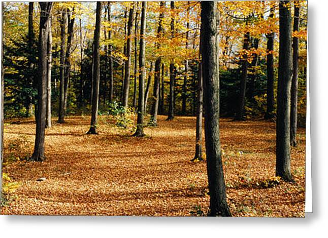 Forest Floor Photographs Greeting Cards - Chestnut Ridge Park Orchard Park Ny Usa Greeting Card by Panoramic Images
