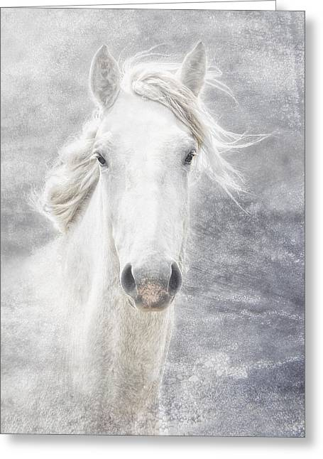 cheval de la Camargue Greeting Card by Joachim G Pinkawa