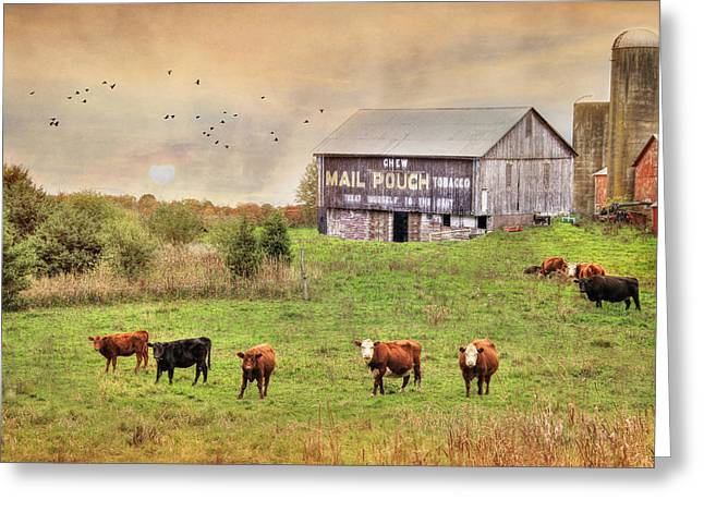 Steer Greeting Cards - Chew Mail Pouch Greeting Card by Lori Deiter