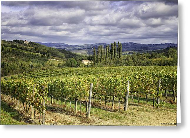 Chianti Greeting Cards - Chianti Country Greeting Card by Fran Gallogly