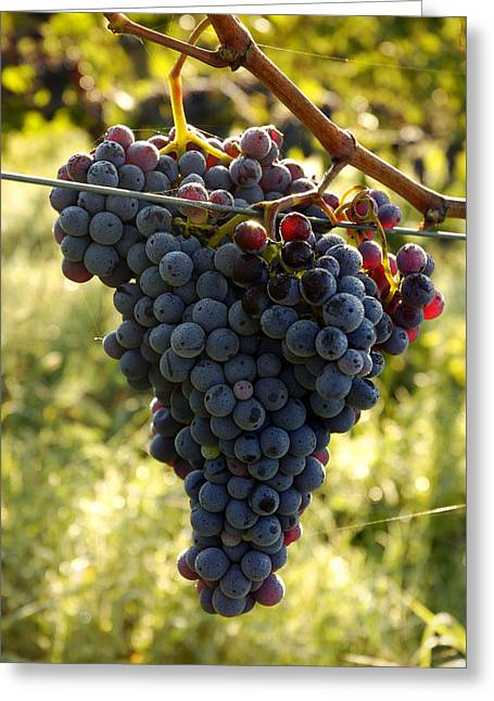 Chianti Grapes Greeting Card by Norman Pogson