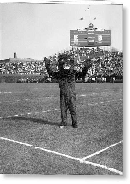 Mascot Greeting Cards - Chicago Bears Mascot In Front Of Wrigley Field Scoreboard Greeting Card by Retro Images Archive