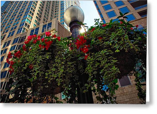 Red Geraniums Greeting Cards - Chicago Street Light Greeting Card by Lynn Bauer