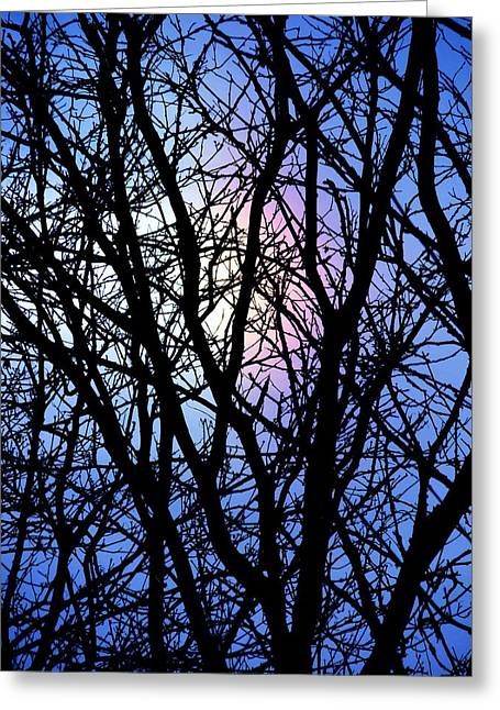 Pink Black Tree Rainbow Photographs Greeting Cards - Chicago Winter Rainbow Greeting Card by Todd Sherlock