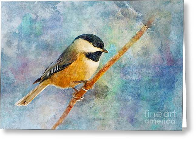 Chickadee Greeting Cards Greeting Cards - Chick a Dee on blue background 5 - Digital Paint Greeting Card by Debbie Portwood