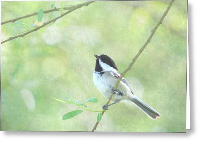 Enhanced Greeting Cards - Chickadee Greeting Card by Angie Vogel