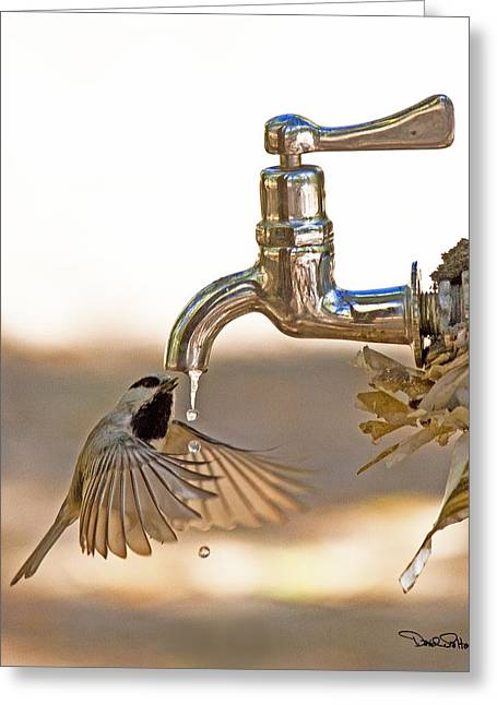Faucet Greeting Cards - Chickadee at Faucet Greeting Card by David Salter
