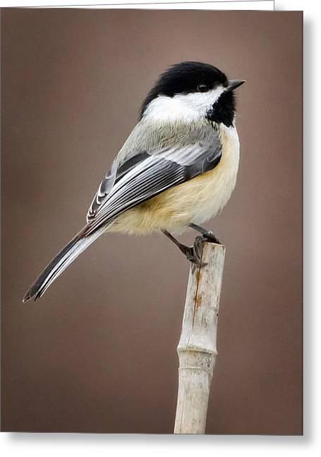Chickadee Greeting Card by Bill Wakeley