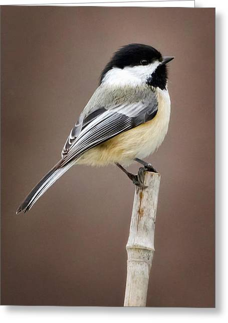 Small Birds Greeting Cards - Chickadee Greeting Card by Bill  Wakeley