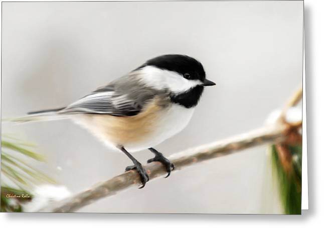 Chickadee Greeting Cards - Chickadee Greeting Card by Christina Rollo