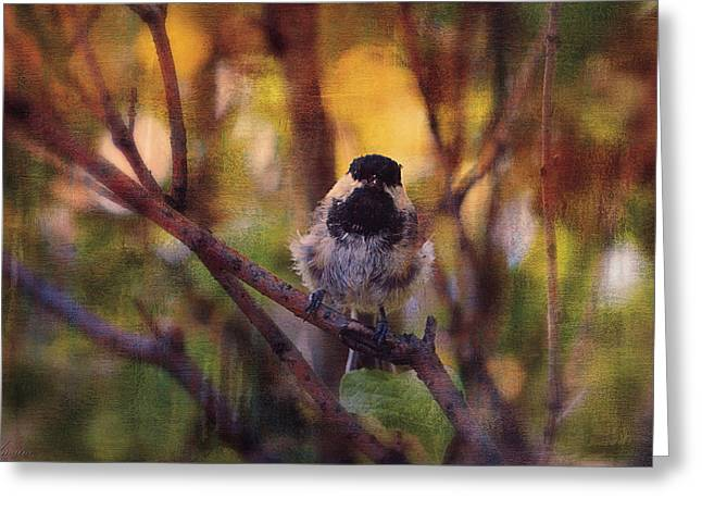 Bird On Tree Greeting Cards - Chickadee Greeting Card by Maria Angelica Maira