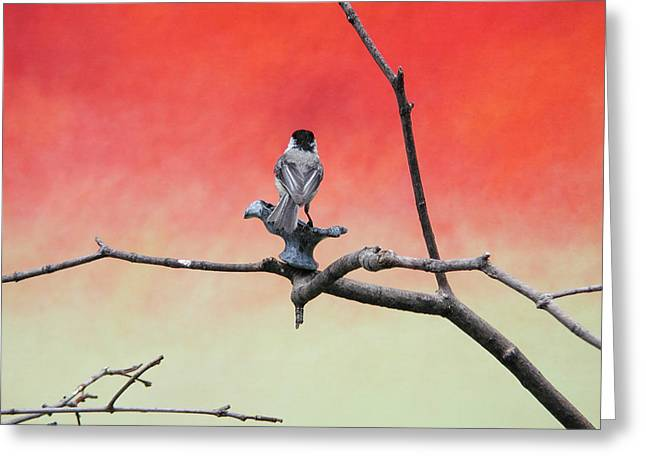 Pensive Greeting Cards - Chickadee on Canvas Greeting Card by Dave Markman