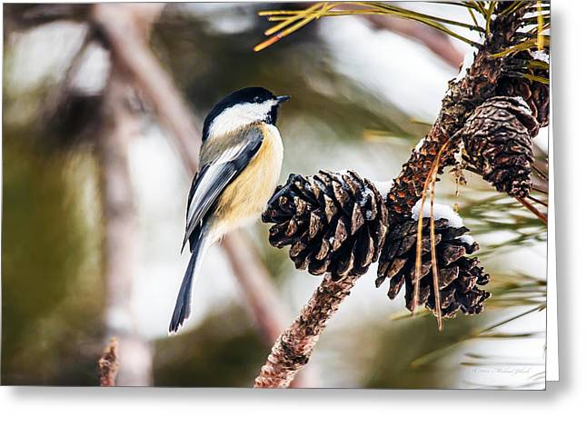 Recently Sold -  - Snow Capped Greeting Cards - Chickadee on the pine cones Greeting Card by Michael Johnk