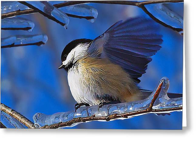Winter Digital Photo Scene Greeting Cards - Chickadee Shakes Off the Cold Greeting Card by Bill Caldwell -        ABeautifulSky Photography